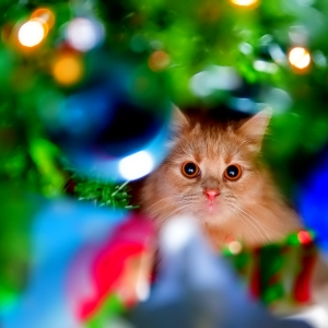 cat-world-wallpaper-new-year-2016-02