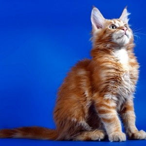 cat-world-wallpaper_0120