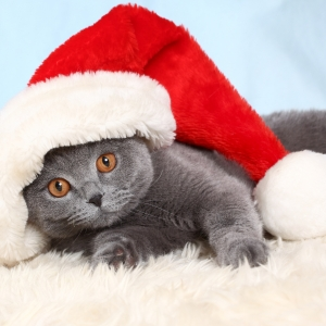 cat-world-wallpaper-new-year-0001
