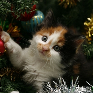 cat-world-wallpaper-new-year-0003