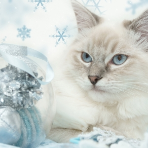 cat-world-wallpaper-new-year-0004