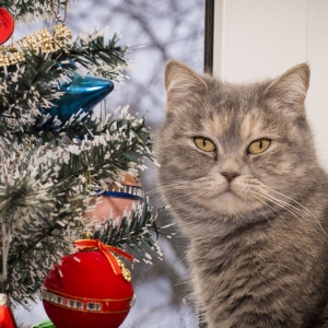 cat-world-wallpaper-new-year-0006