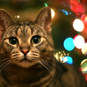 cat-world-wallpaper-new-year-0009