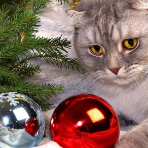 cat-world-wallpaper-new-year-0010
