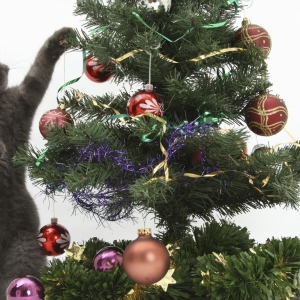 cat-world-wallpaper-new-year-0013