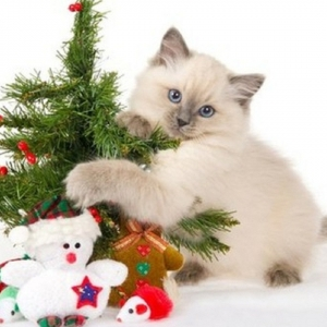 cat-world-wallpaper-new-year-0016