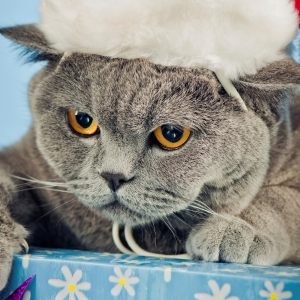 cat-world-wallpaper-new-year-0019