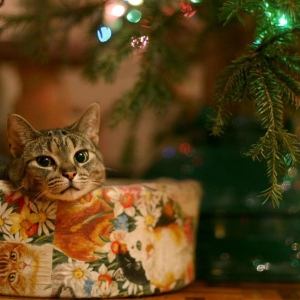 cat-world-wallpaper-new-year-0022