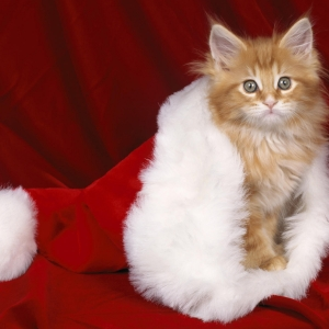 cat-world-wallpaper-new-year-0024