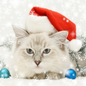 cat-world-wallpaper-new-year-0026