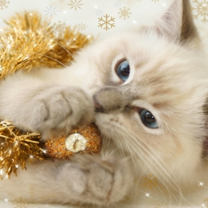 cat-world-wallpaper-new-year-0029
