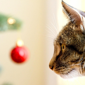 cat-world-wallpaper-new-year-0032