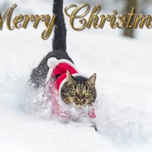 cat-world-wallpaper-new-year-0036