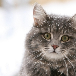 cat-world-wallpaper-new-year-0039