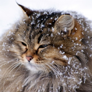 cat-world-wallpaper-new-year-0040