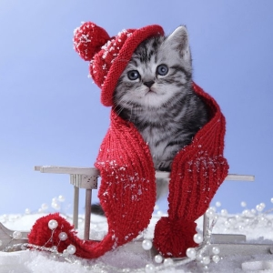 cat-world-wallpaper-new-year-0046