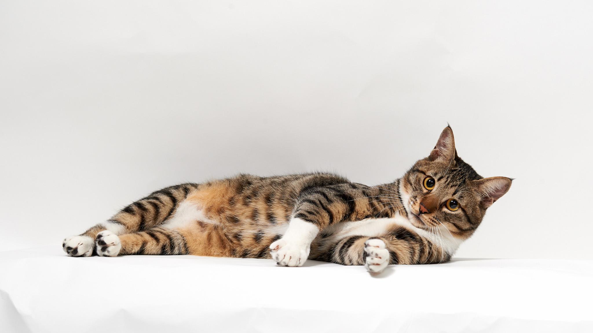 На рабочий стол обои hd кошки
