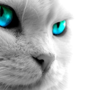 cat-world-wallpaper_0008
