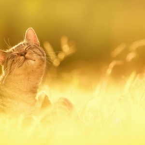 cat-world-wallpaper_0011