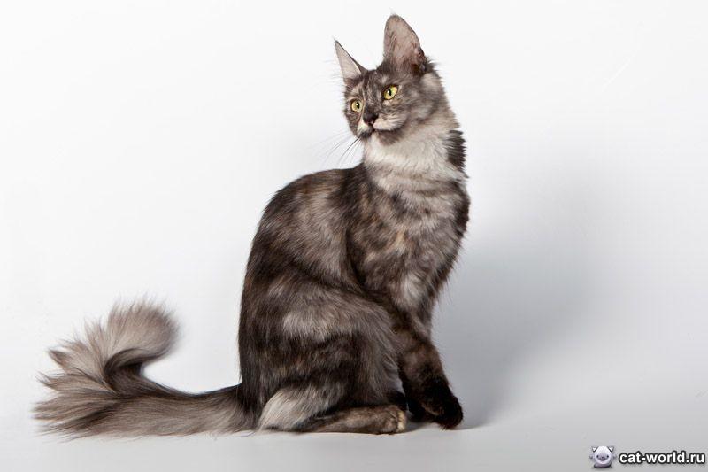 Черные ангорские коты