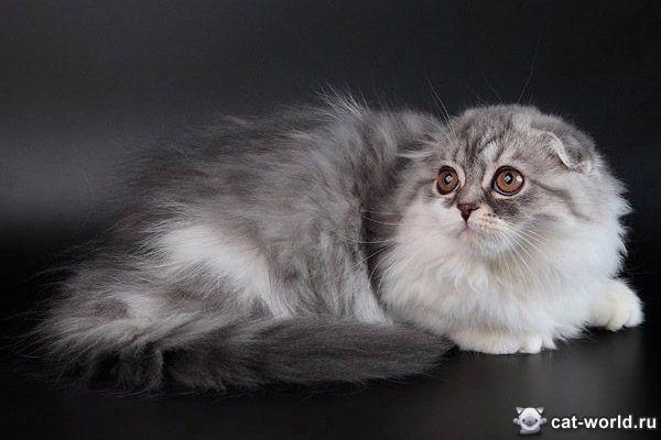 Питомники кошек Каталог питомников кошек разных пород