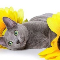Приветствующий кот