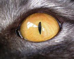 Кошачий глаз, фото