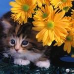 Какая порода кошки подойдет именно вам