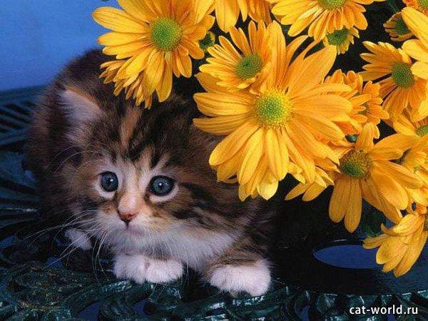Котёнок дома, фото