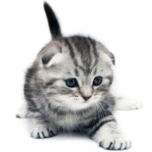 Клички у котов на т