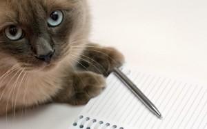 Кот-писатель, фото