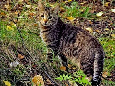 Дикая лесная кошка на природе, фото