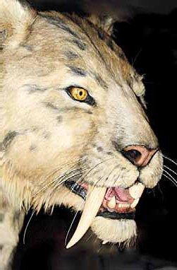Как выгляденл саблезубый тигр