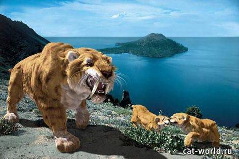 Семейство саблезубых тигров, фото