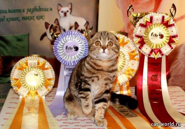 Кошачья выставка, фото1