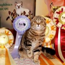 Кот на выставке обложка