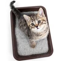 Как легко и быстро приучить котенка к лотку