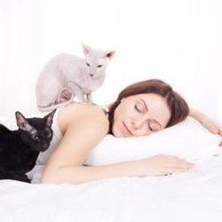Кошки чувствуют заболевания у человека