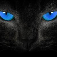 Кошачье зрение: как видят кошки