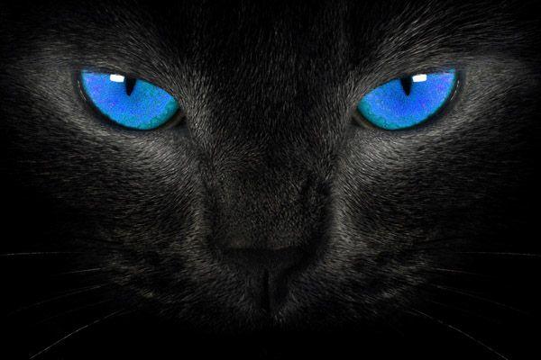 Голубоглазая чёрная кошка