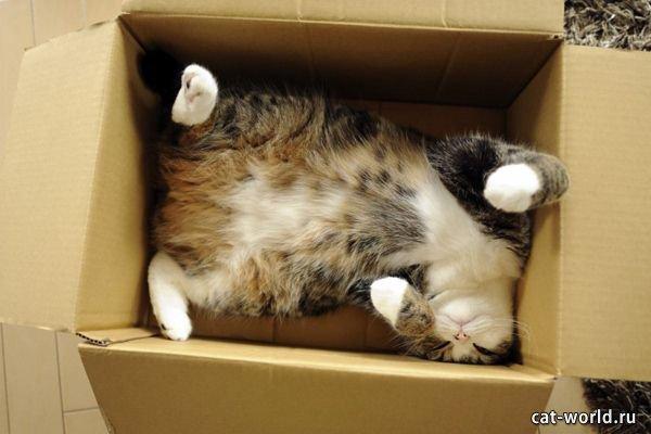 Кот нежится в коробке