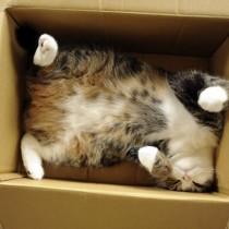 Кошки в коробках, обложа