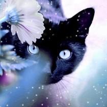 Таинственная кошка