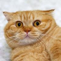 20 интересных фактов о кошках №1