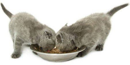Едя котят