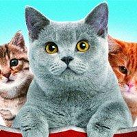 Кошек не любить нельзя: Серия №4