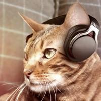 Топ 10 лучших песен про кошек