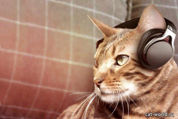 Современная песня про кота