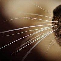 Усы кошек, обложка